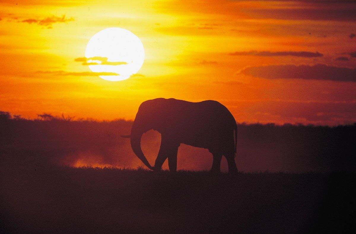 Voyage organise afrique du sud elephant coucher de soleil - Heure du coucher de soleil aujourd hui ...