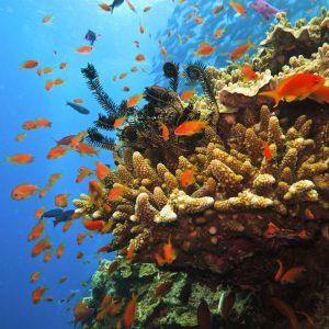 Voyage-organise-Australie-Grande-Barriere-Corail-Cairns-Voyages-Del-Tour
