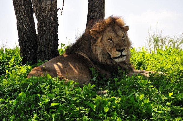 voyage organisé safari